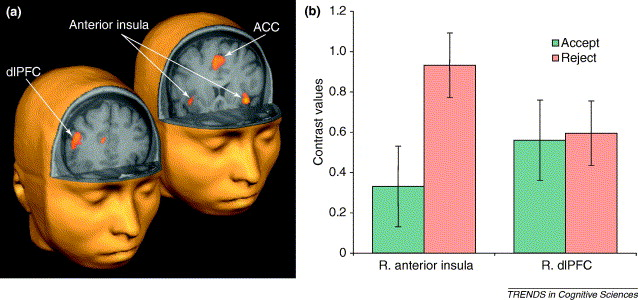brain sex differences orbitofrontal cortex cingulate in Norwalk