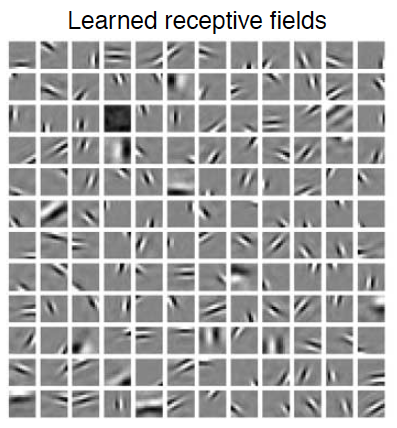 Learned receptive fields to maximize sparseness of natural scenes (Olshausen and Field, 2004, Current Opinion in Neurobiology)