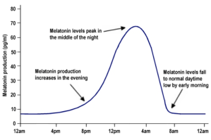 Melatonin Production