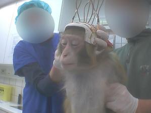monkey-test1
